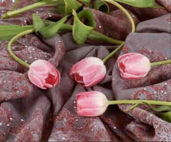 2_Tulips
