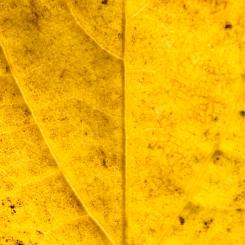 Leaves_Razek-0295