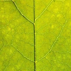 Leaves_Razek-0306
