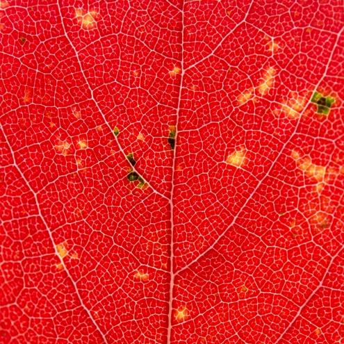 Leaves_Razek-0319